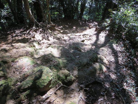 祇園山ハイキングコース5