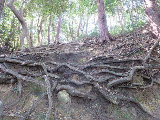 祇園山ハイキングコース4