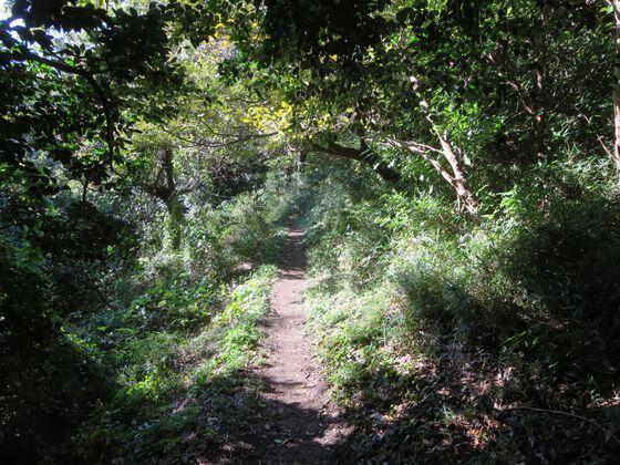 祇園山ハイキングコース6 width=