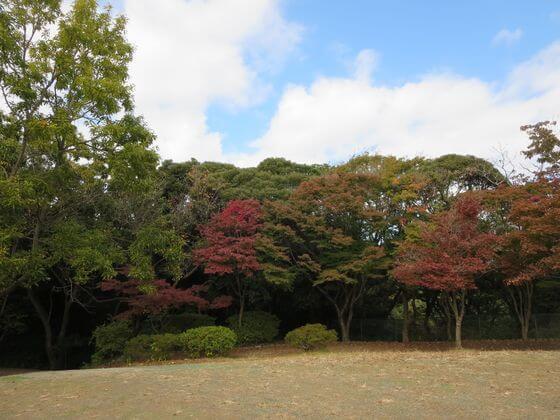 源氏山公園 紅葉