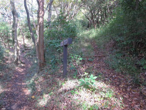 衣張山ハイキングコース4