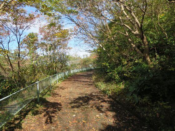 衣張山ハイキングコース6