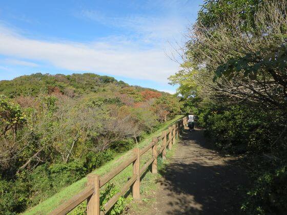 鎌倉市子ども自然ふれあいの森 道