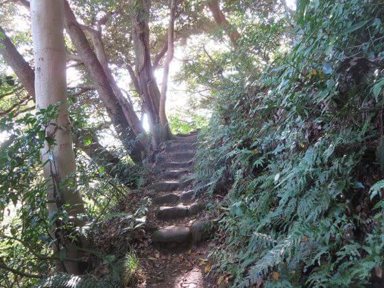 衣張山ハイキングコース10