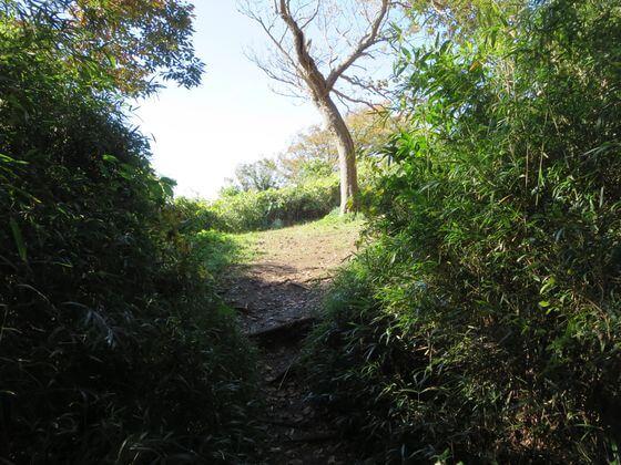 衣張山ハイキングコース11