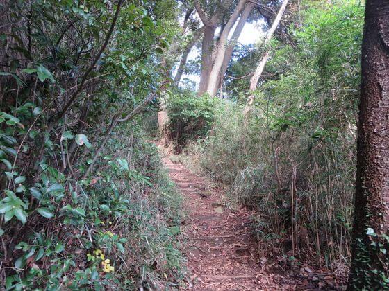衣張山ハイキングコース13