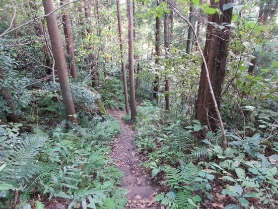 衣張山ハイキングコース15