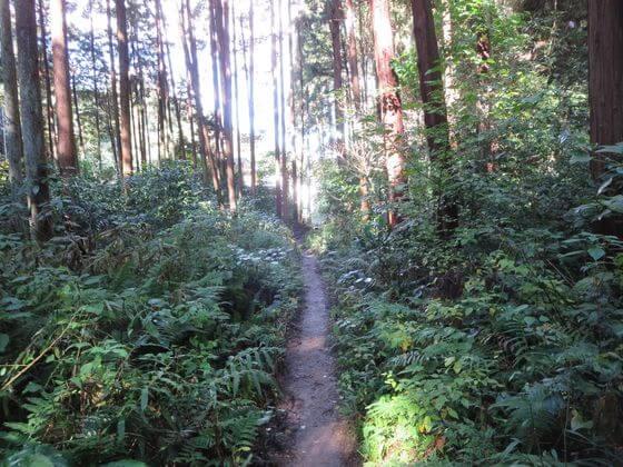 衣張山ハイキングコース17