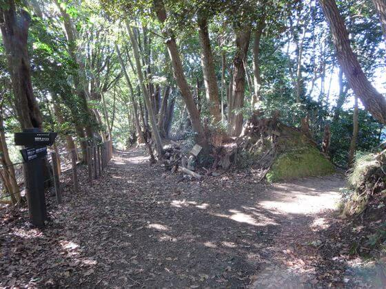 天園ハイキングコース4