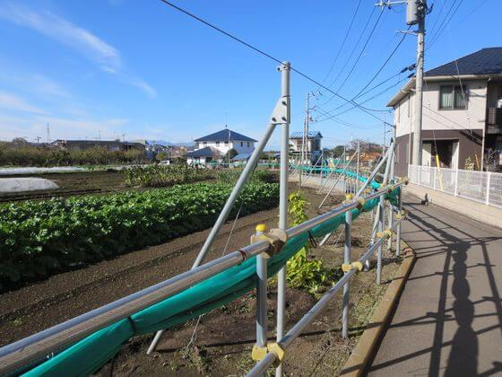 長津田 畑