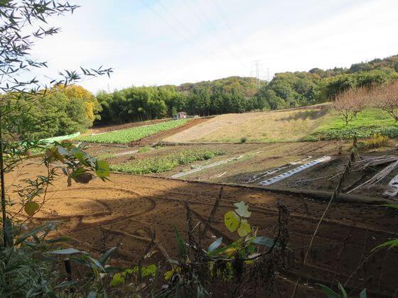 伯楽谷戸 周辺 畑