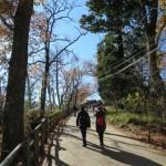 紅葉の高尾山を6号路の琵琶滝コースから登山してみた!