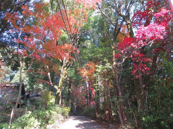天覧山 登り口 紅葉