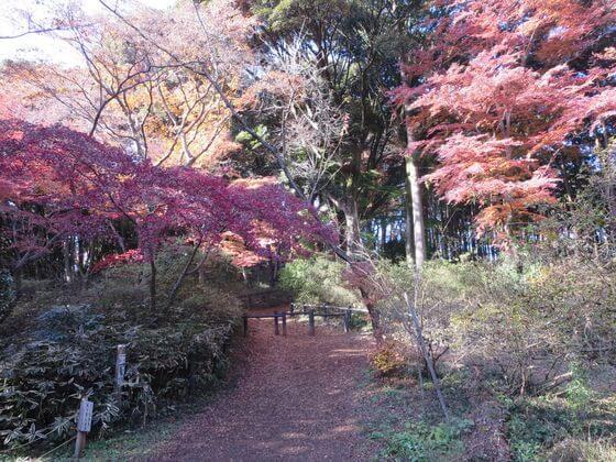 天覧山 広場 紅葉