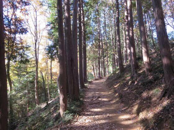 多峯主山 山道2
