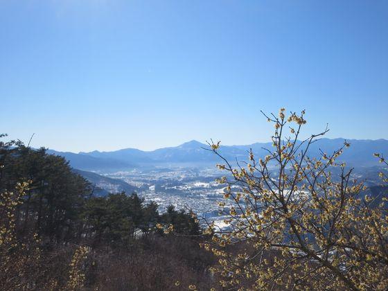 宝登山 ロウバイ園9