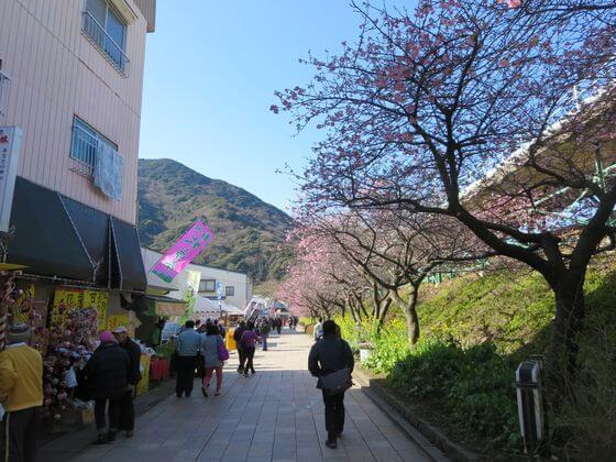 河津桜まつり 屋台