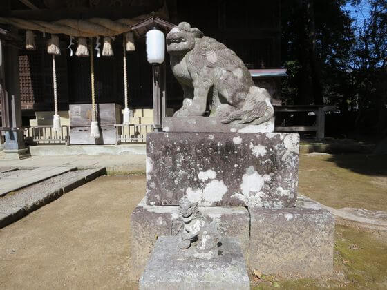 河津来宮神社 狛犬 右