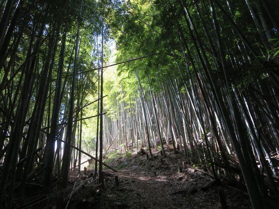 竹林 河津城山