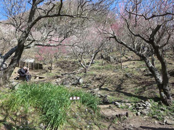 湯河原梅林