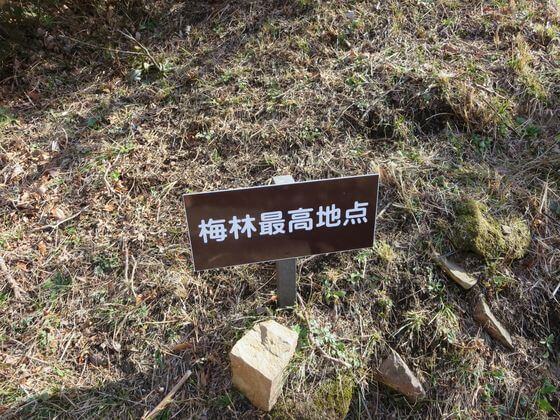 湯河原梅林 最高地点