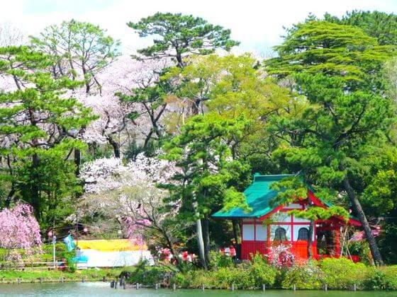 洗足池 桜