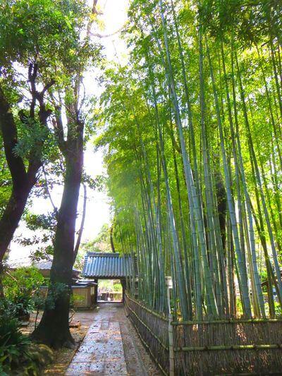 妙福寺 竹林