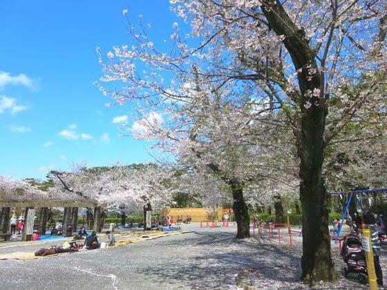 洗足池公園 お花見