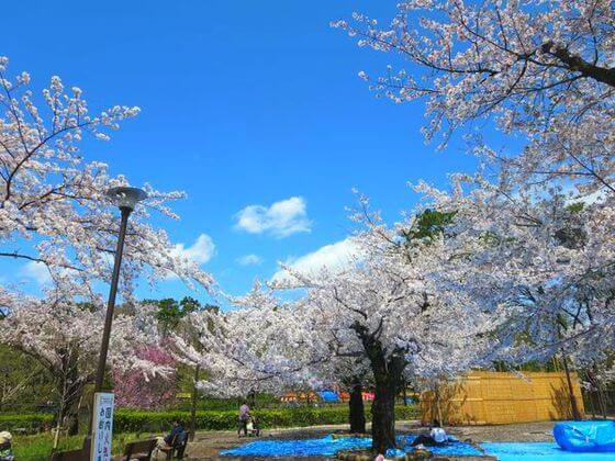 洗足池公園 お花見スポット