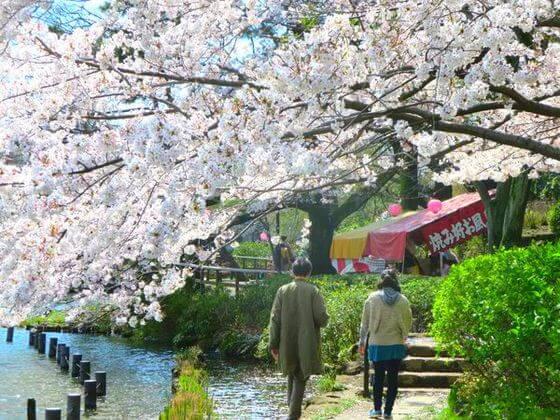 桜 洗足池公園