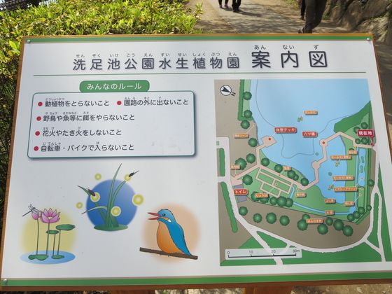 洗足池公園水生植物園 案内図