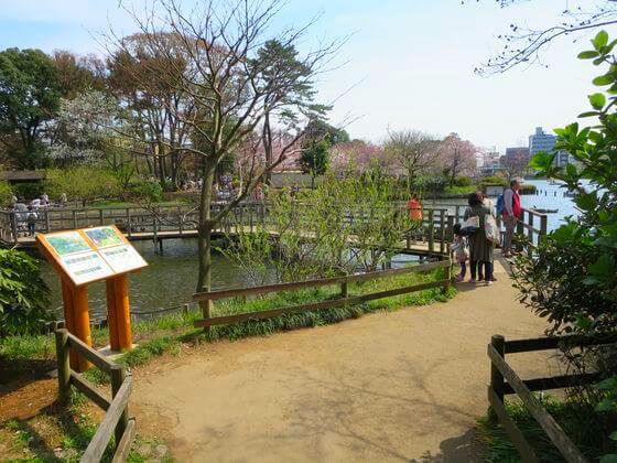 洗足池公園水生植物園