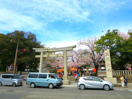 三嶋大社 桜