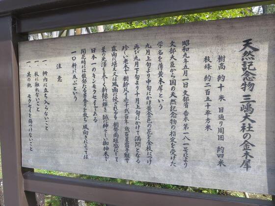 三嶋大社 金木犀 説明