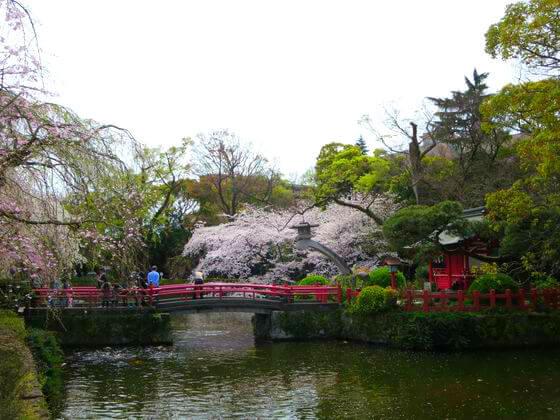 三嶋大社 厳島神社 桜