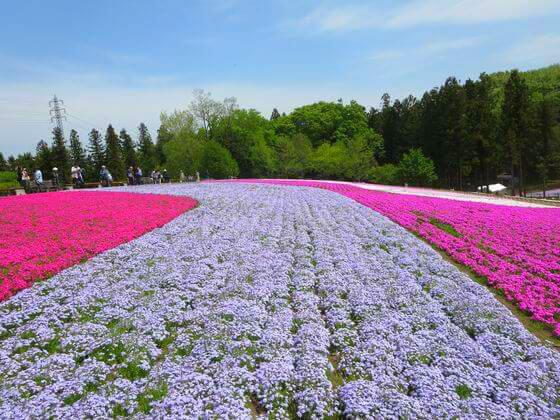 秩父 芝桜 風景