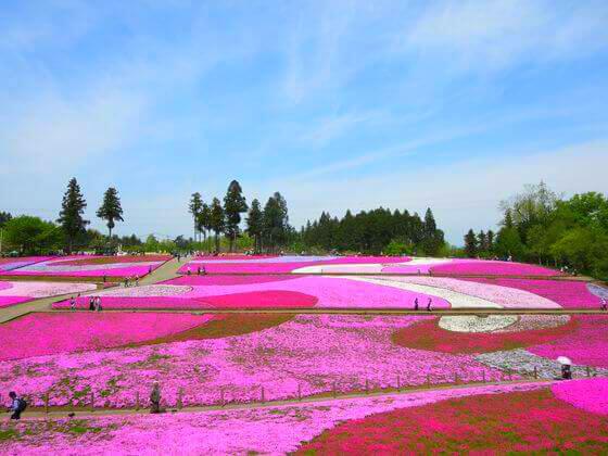 秩父 芝桜 景色