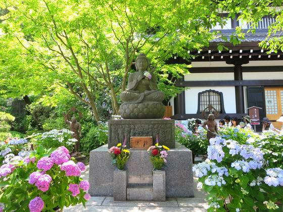 鎌倉 長谷寺 紫陽花