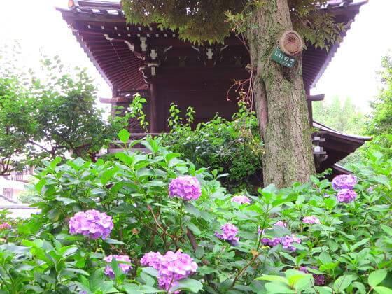 白山神社 本殿
