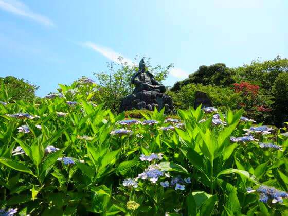 源氏山公園 紫陽花