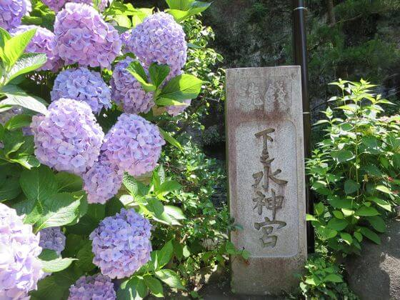 銭洗弁財天 紫陽花