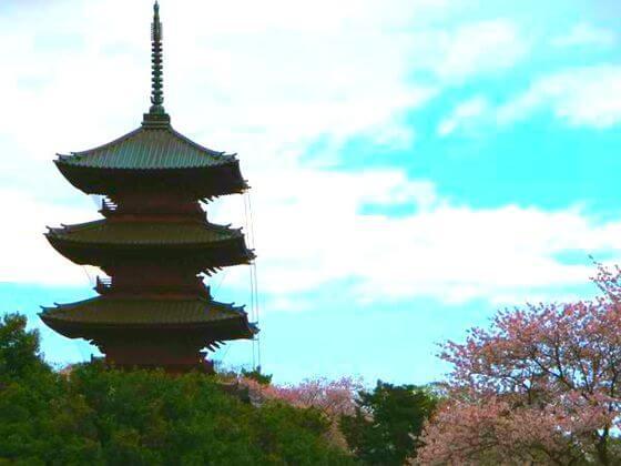 池上本門寺 桜