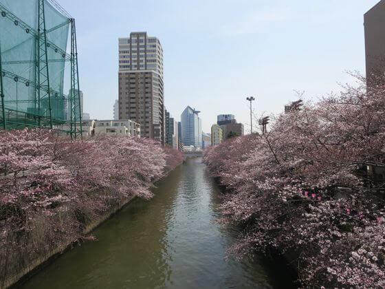 目黒川 ふれあい橋 桜