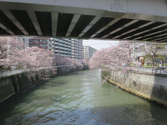 亀の甲橋 桜