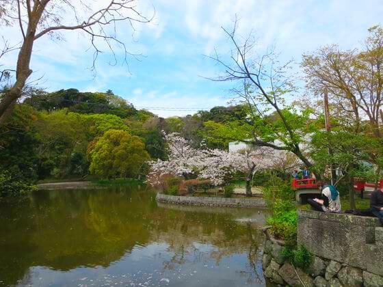 平家池 桜