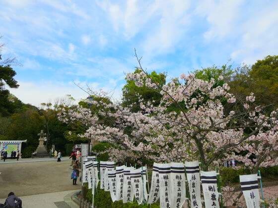 源氏池 桜