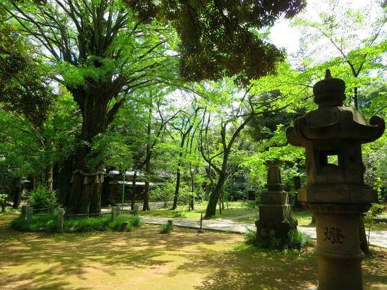 赤坂氷川神社 境内