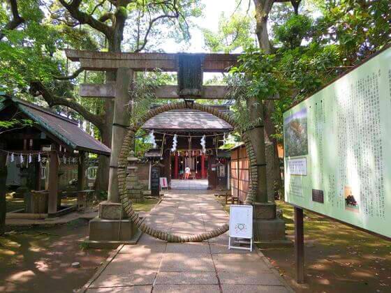 赤坂氷川神社 茅の輪
