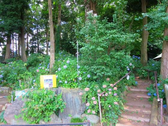 谷保天満宮 紫陽花園