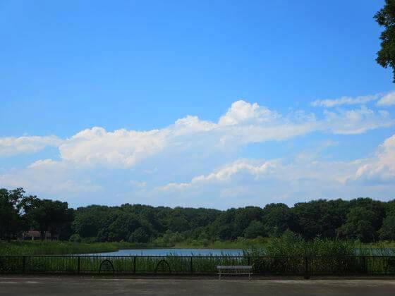 国営昭和記念公園 水鳥の池
